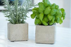 DIY Pflanzen-Cubes aus Beton