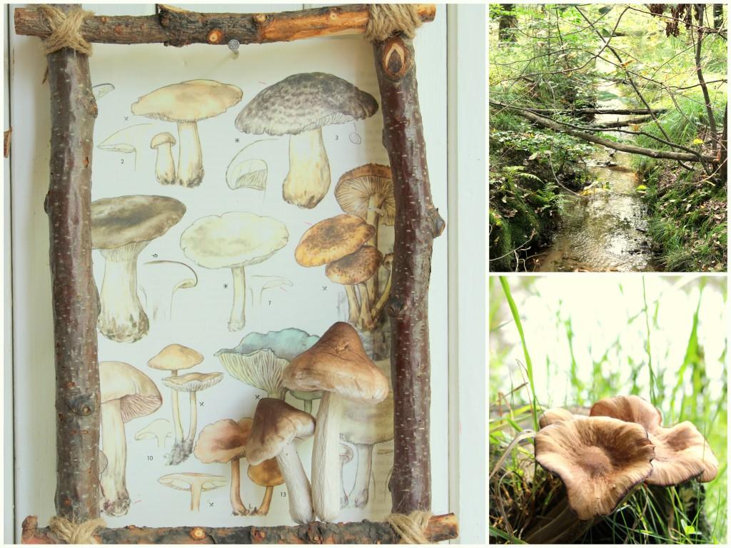 Bilderrahmen aus dem Wald 13