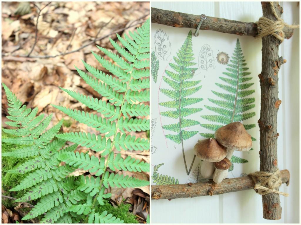 Bilderrahmen aus dem Wald 14