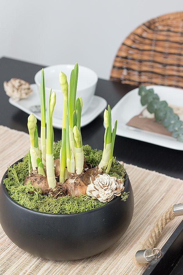 gefüllte Narzissen mit Moos bepflanzt als Ostertischdeko