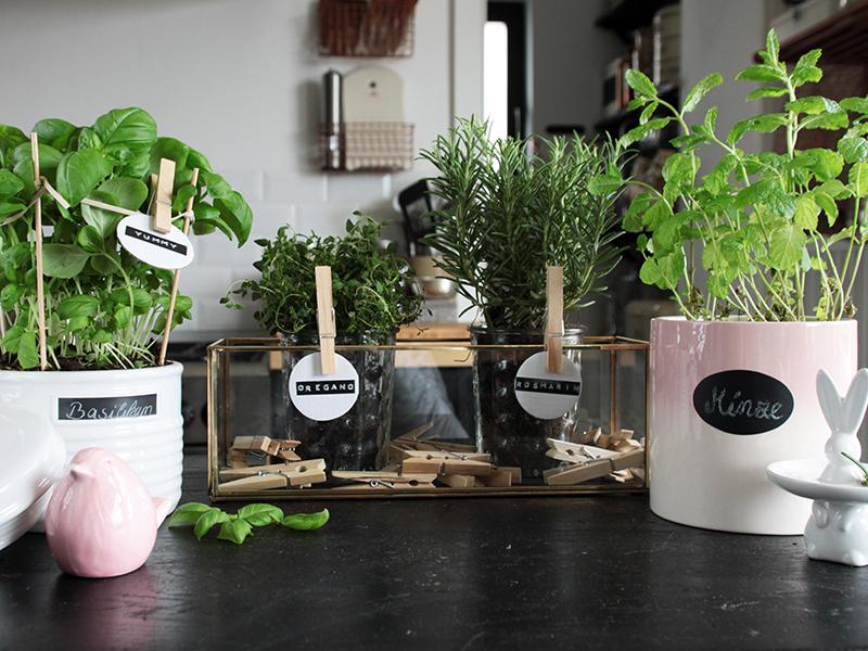 kleiner-DIY-Kräutergarten-in-der-Küche