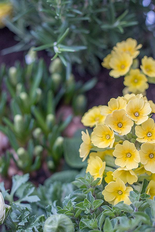 Kräuter-Blumen-Mix im Hochbeet von DEPOT