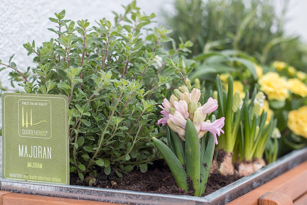 bepflanztes Hochbeet Akazie von DEPOT