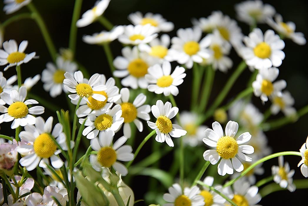 Edles-Porzellan-als-romantischer-Begleiter-für-Blumen 11k