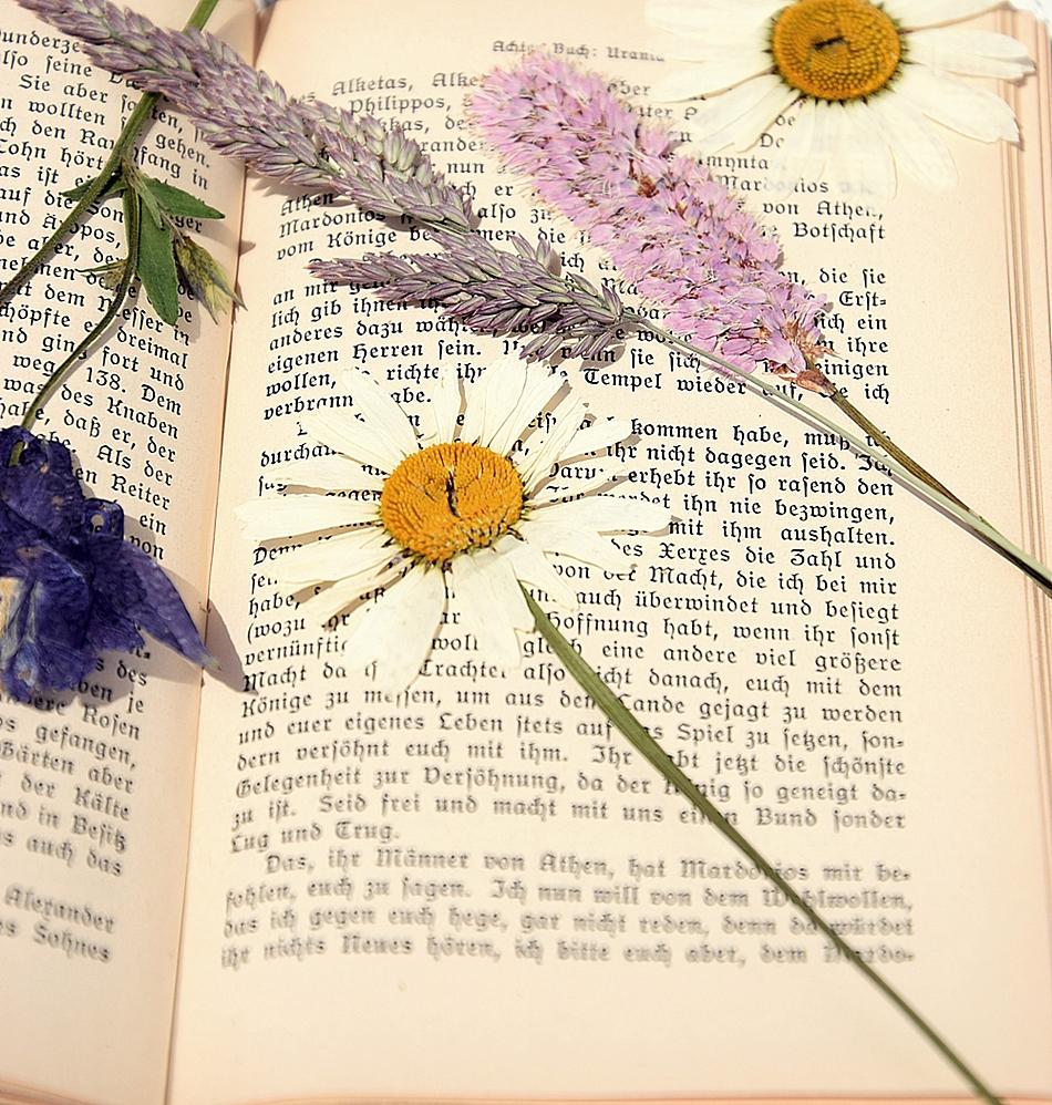 DIY-Sommerdeko-mit-gepressten-Blumen 14k