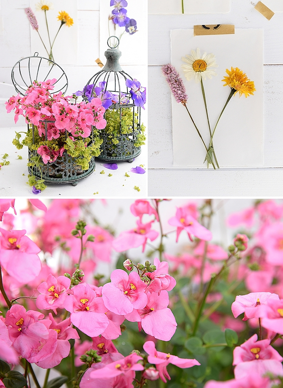 DIY-Sommerdeko-mit-gepressten-Blumen 1kk