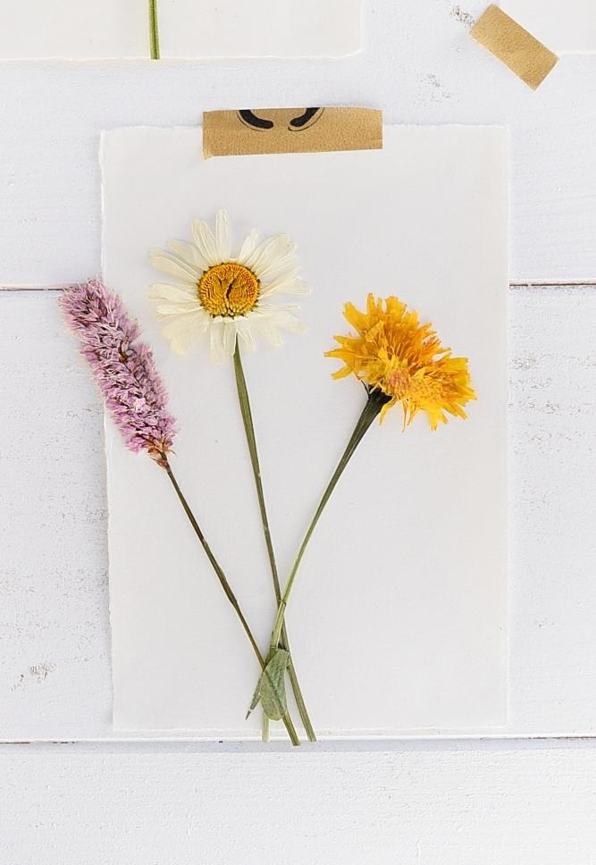 DIY-Sommerdeko-mit-gepressten-Blumen 2k
