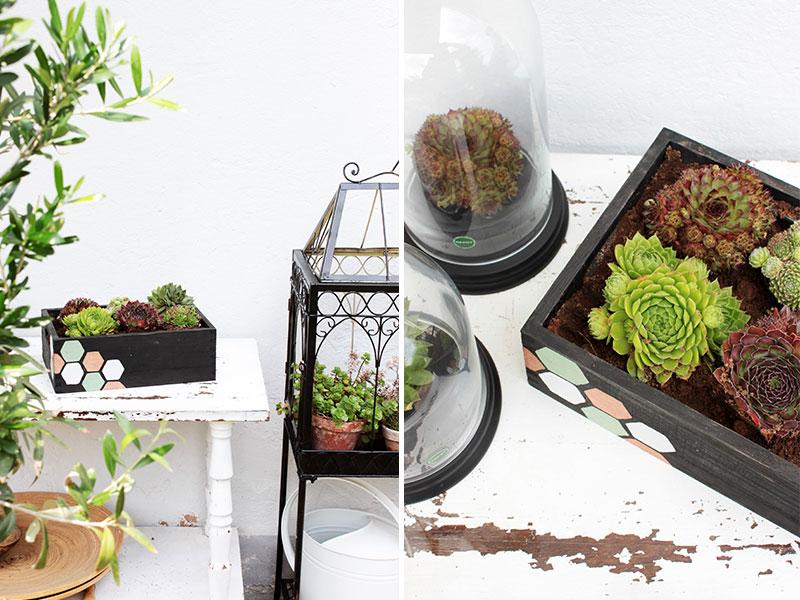DIY-Blumenkasten-mit-Sukkulenten