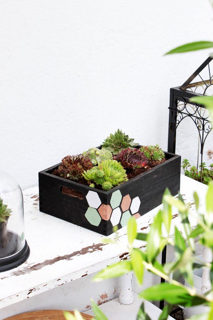 DIY-Blumenkasten-mit-Wabenprint-für-Sukkulenten-