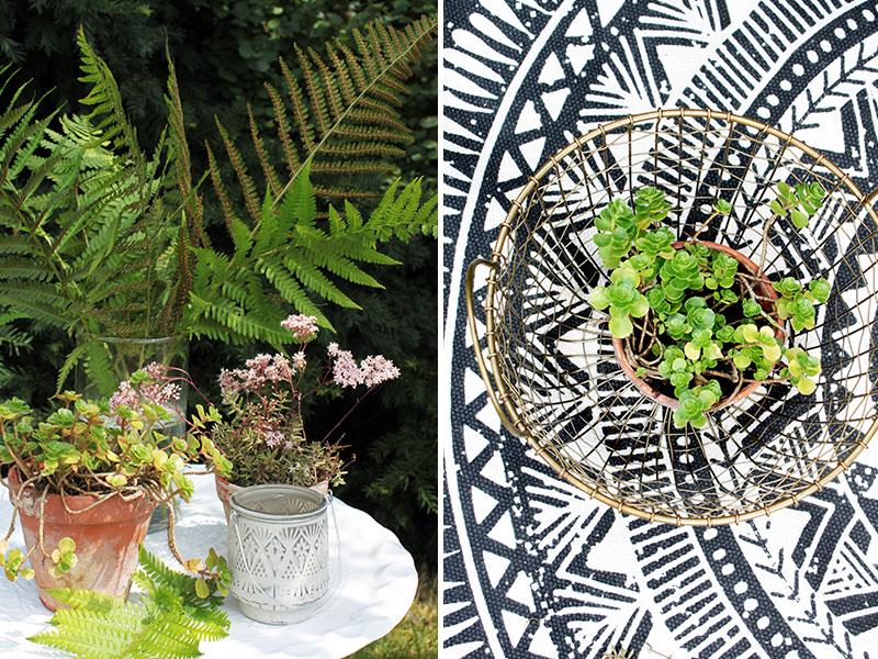 Sukkulenten-als-Outddorpflanzen