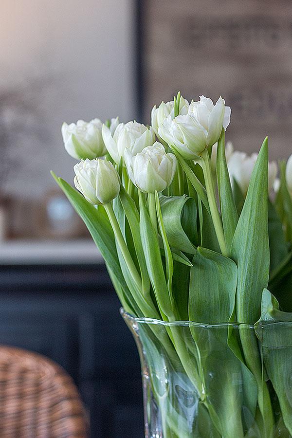 gefüllte weiße Tulpen für den Frühstückstisch