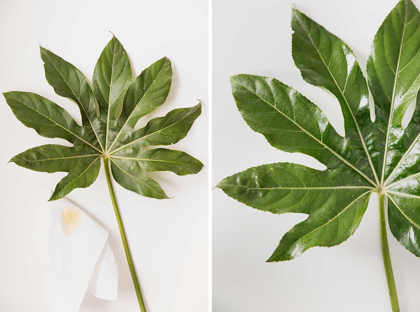 So kann man Schnittblumen frisch halten, 10 Tipps zur Blumenpflege.