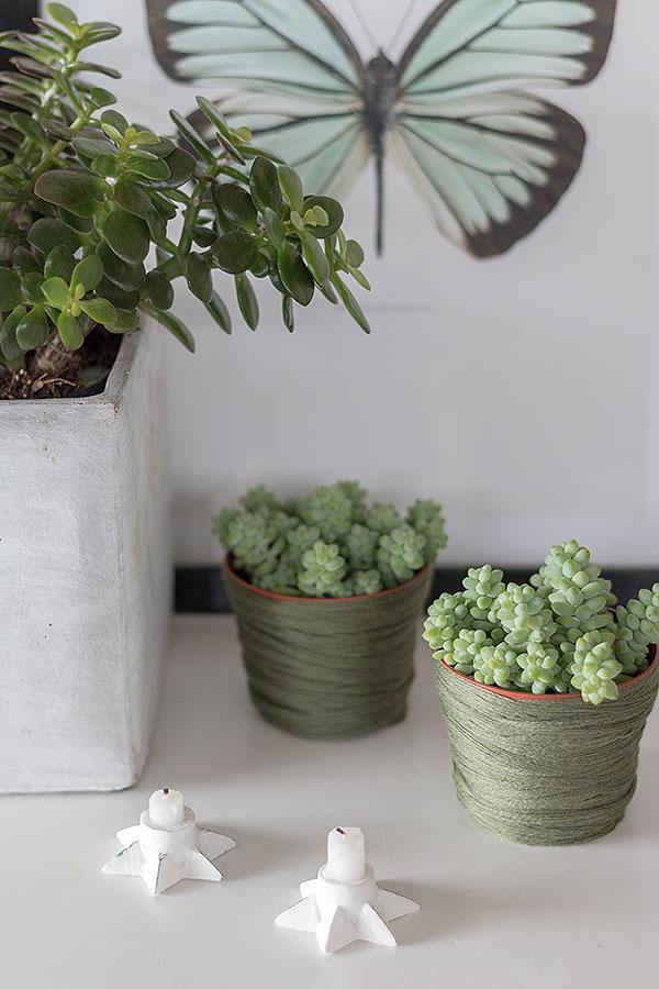 Sukkulenten Stillleben im Wohnzimmer