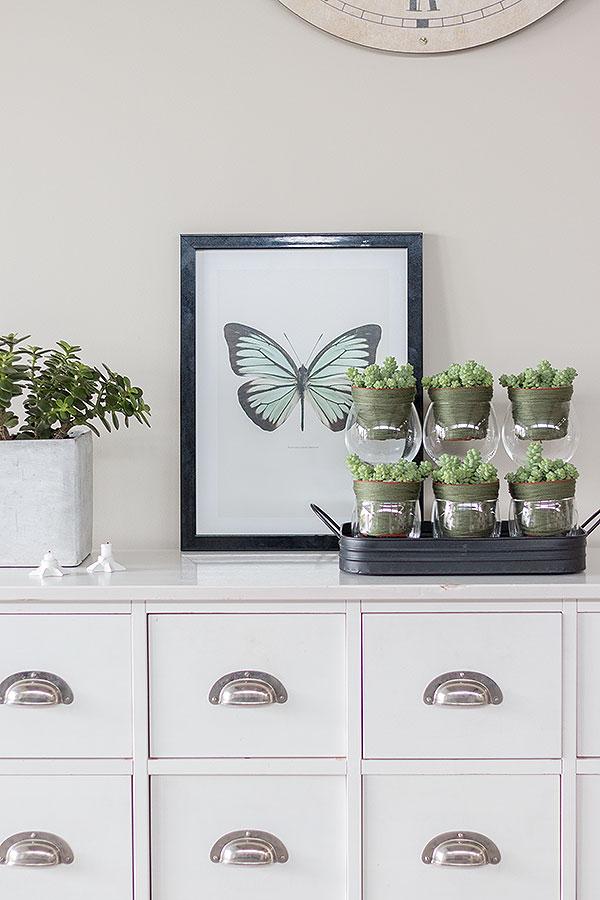 Sukkulenten im Wohnraum integrieren