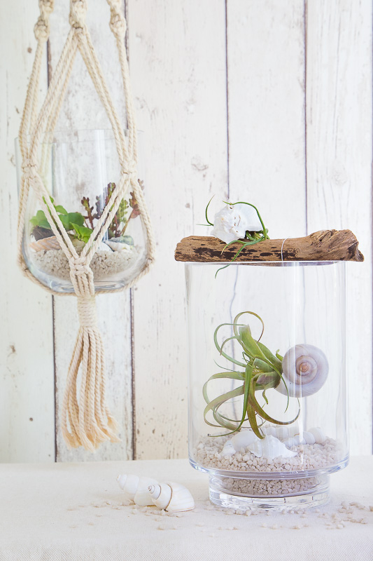 Dekorative Kombi – Air Plants mit Strandgut