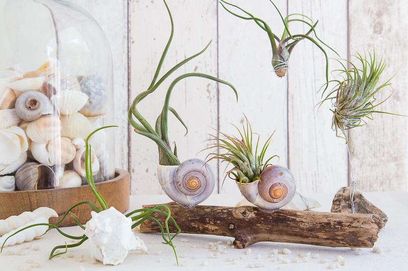 dekorative kombi air plants mit strandgut sch n bei dir by depot. Black Bedroom Furniture Sets. Home Design Ideas