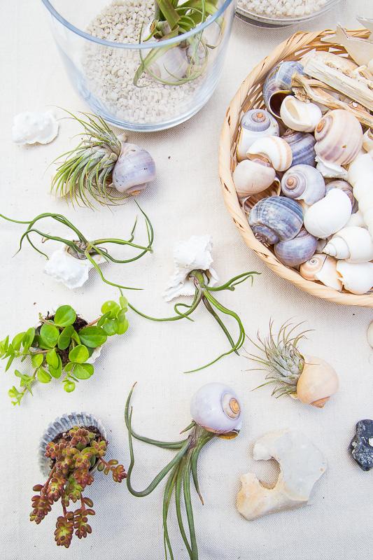 Dekorative Kombi – Air Plants mit Strandgut