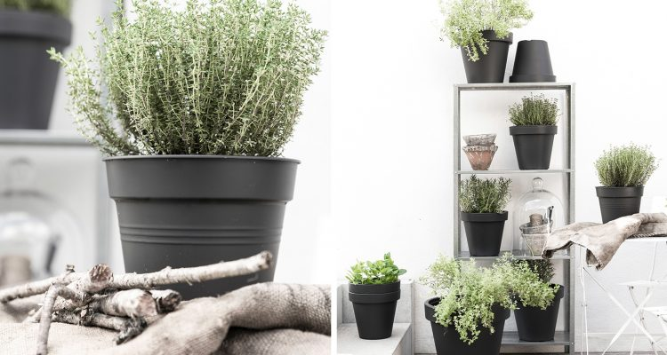 Kr uter und pflanzen berwintern gewusst wie sch n bei for Wohnungs deko