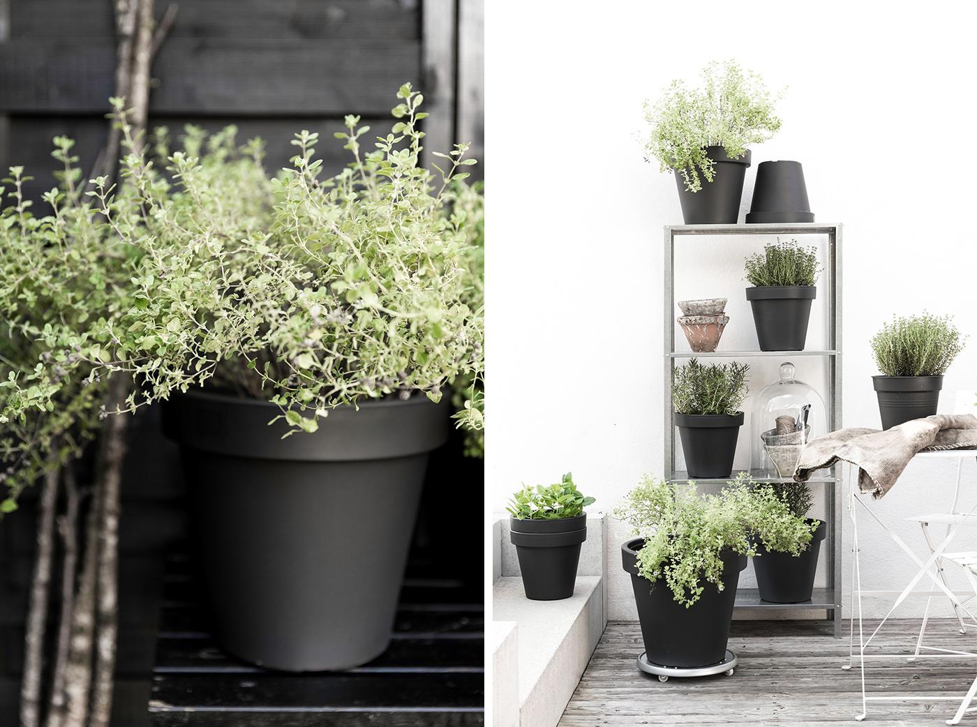 topfpflanzen winterfest 7 sch n bei dir by depot. Black Bedroom Furniture Sets. Home Design Ideas