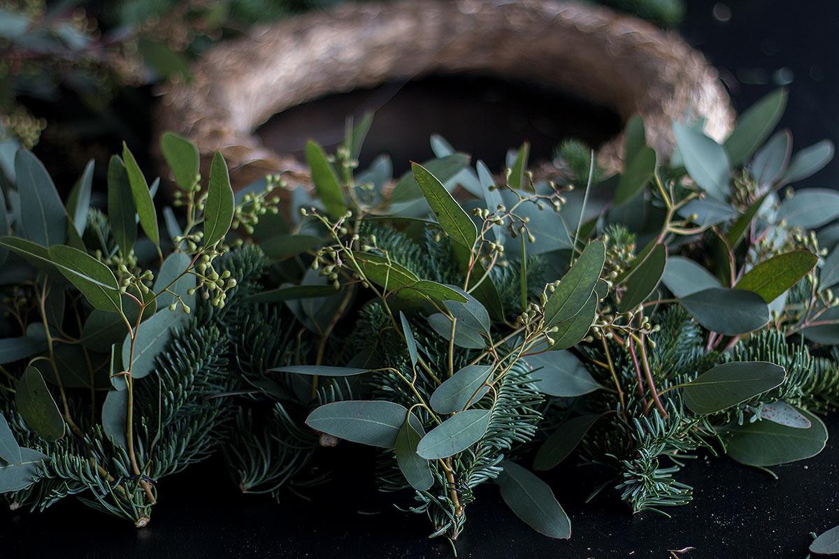 Nobilis und Eukalyptus Zweige vorbereiten