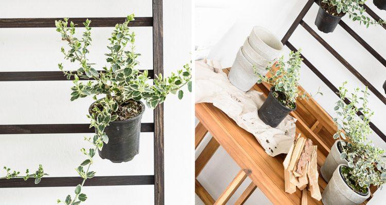 Welche Balkonpflanzen Mogen Es Sonnig Welche Lieben Den Schatten