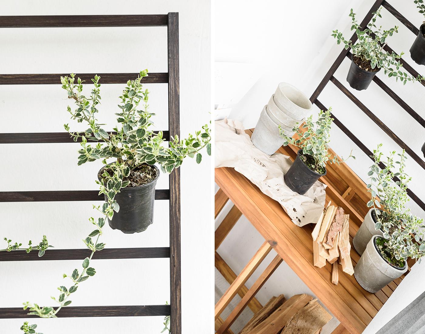 welche balkonpflanzen m gen es sonnig welche lieben den. Black Bedroom Furniture Sets. Home Design Ideas