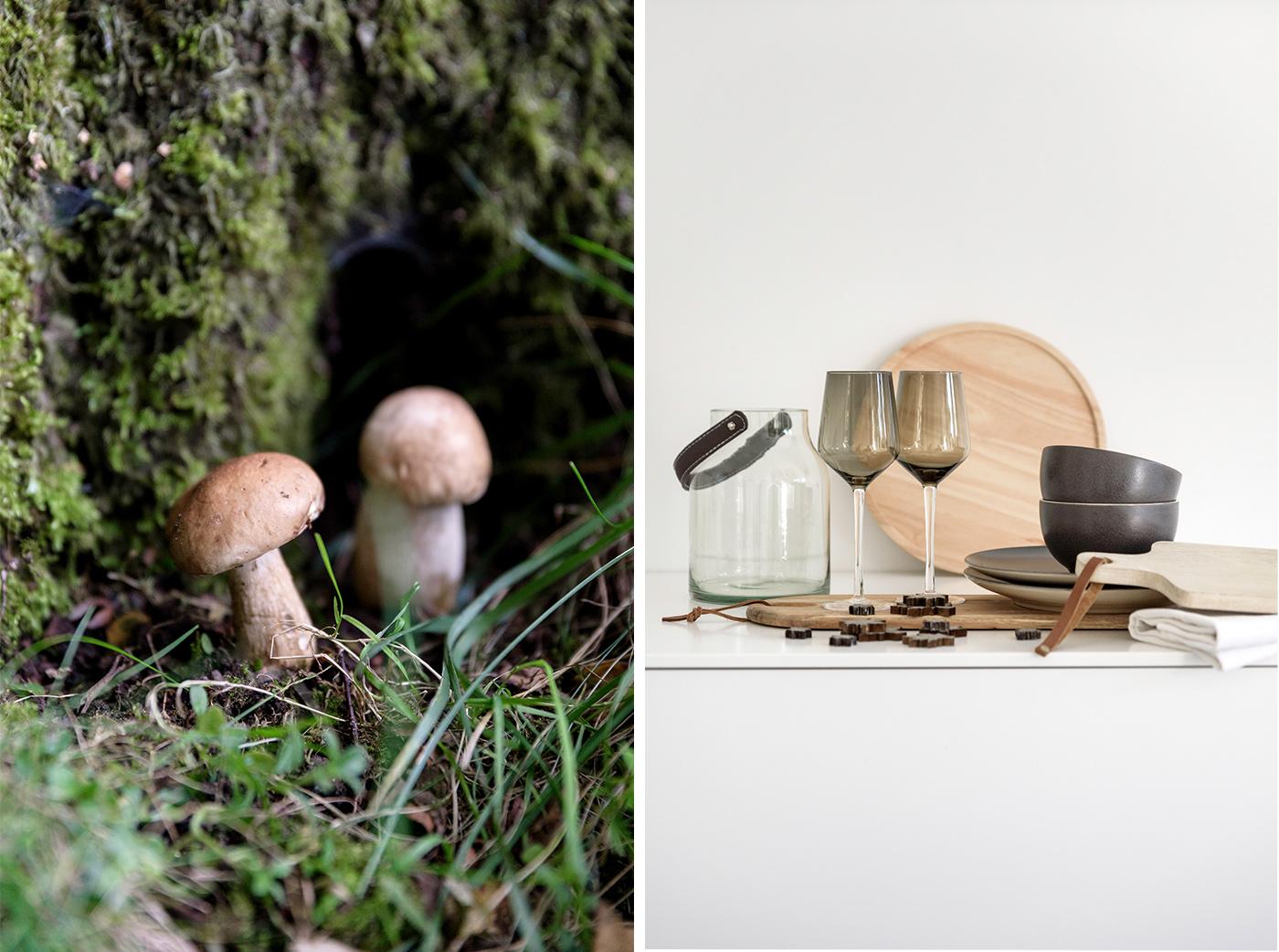Pilze sammeln, das kann man beachten!