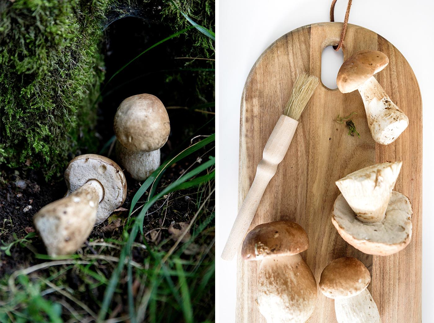 Pilze sammeln, Tipps für Einsteiger