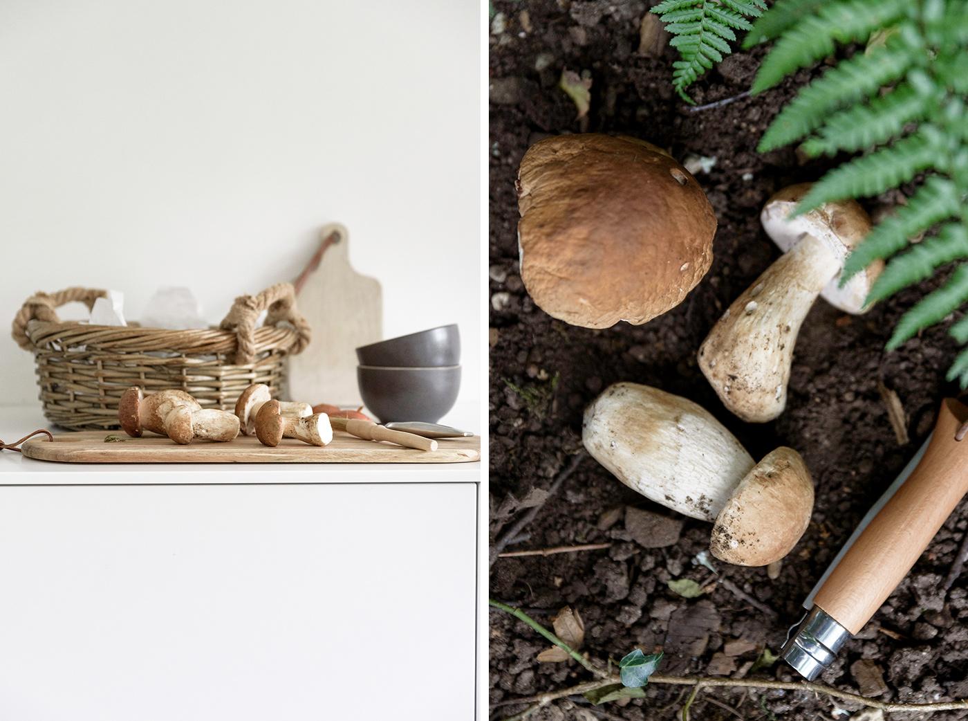 Tipps zum Thema: Pilze sammeln