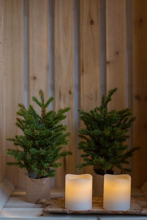 Weihnachten in der Weinkiste mit kleinen Tannenbäumen
