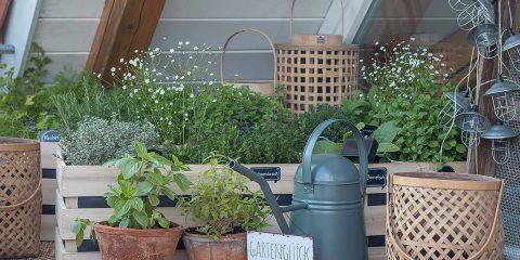 Kräutergarten in Holzkisten Anleitung