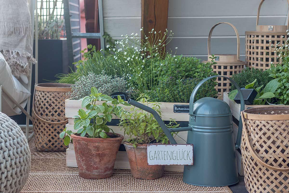 Kräutergarten in Holzkisten pflanzen auf dem Balkon