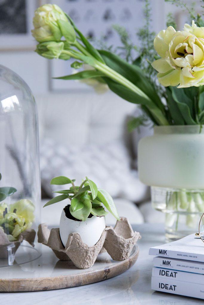 mini-sukkulenten-in-eierschalen-einpflanzen