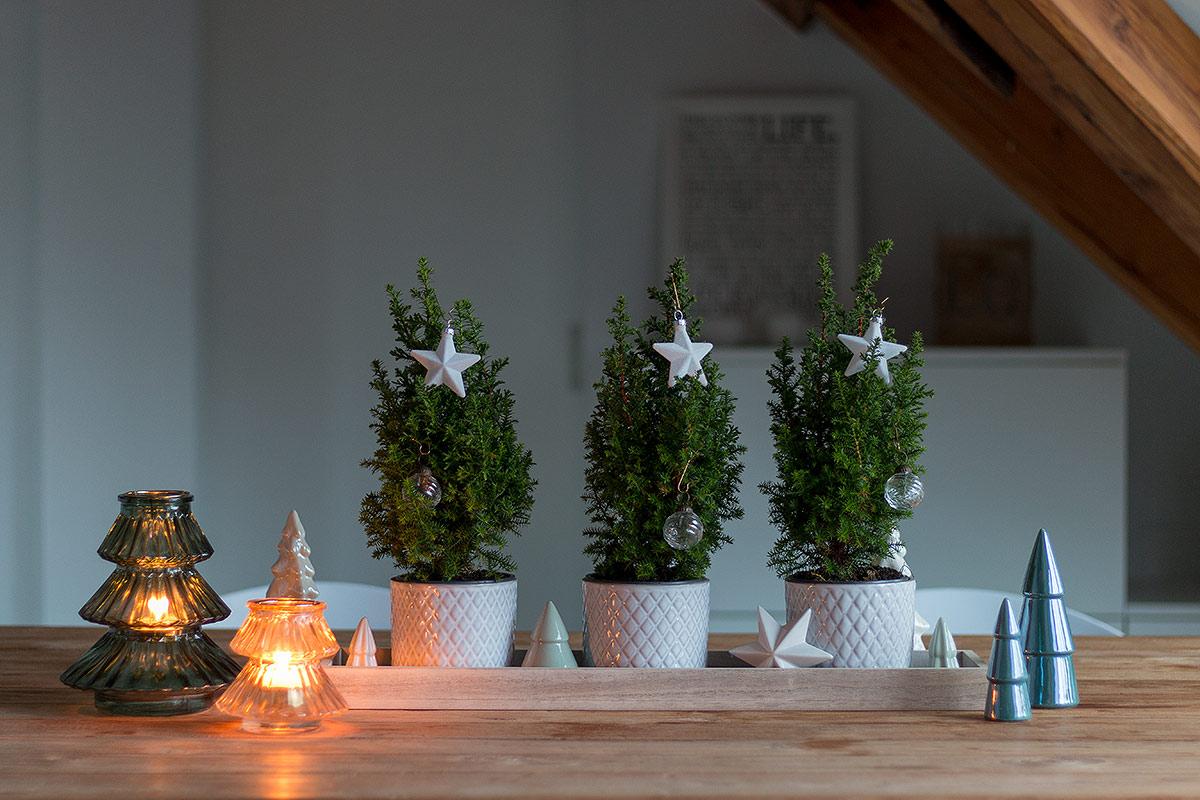 schlichtes weihnachtliches Dekotablett mit echten kleinen Tannenbäumen