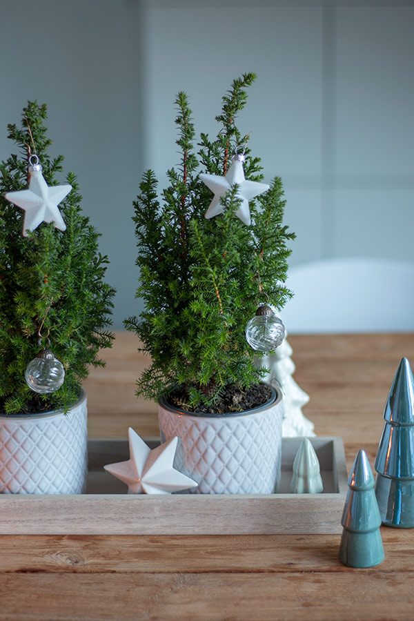 weihnachtliches Dekotablett mit echten kleinen Tannenbäumen
