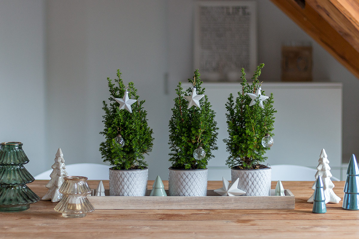 weihnachtliches Dekotablett mit kleinen Tannenbäumen