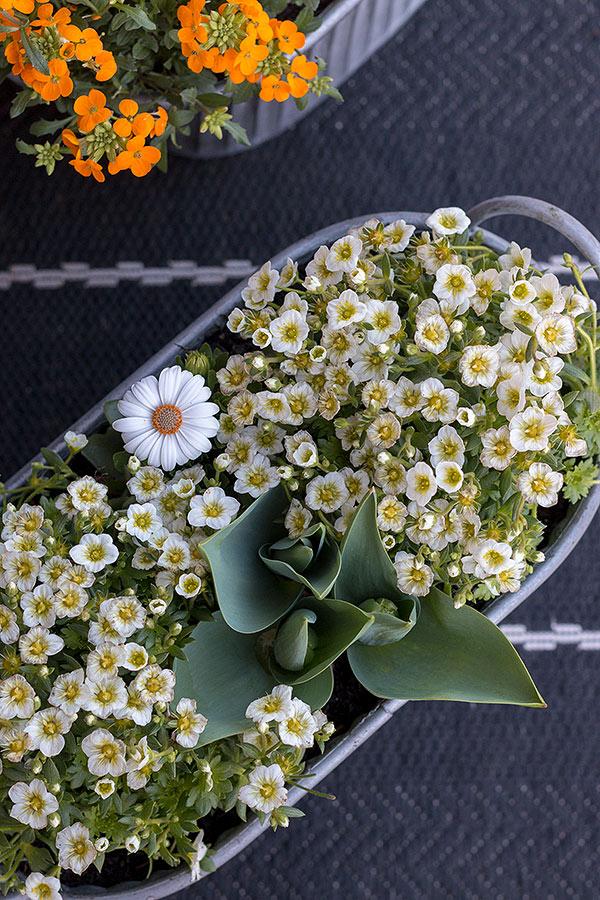 Fertig ist der Blumenkasten!