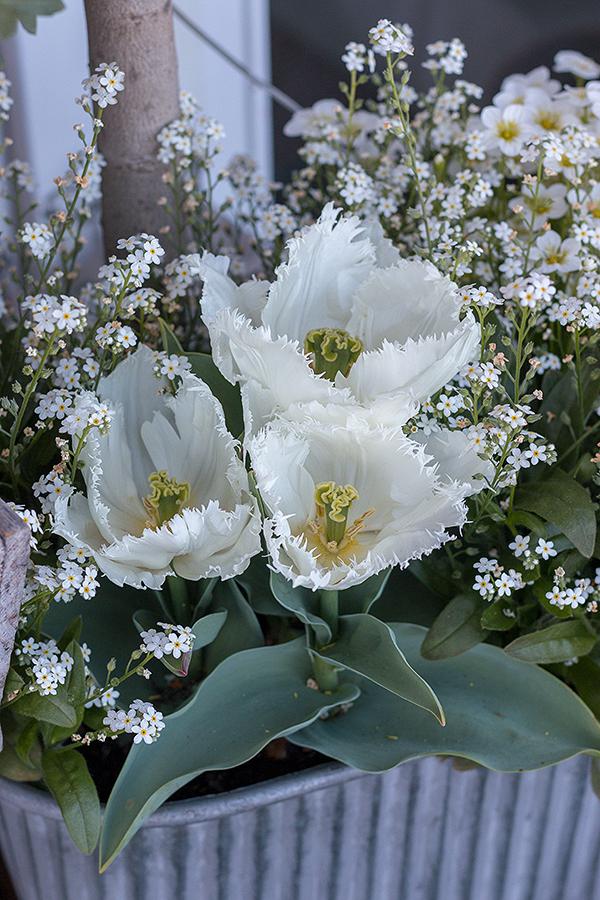 Steinbrech, Tulpen, Vergissmeinnicht