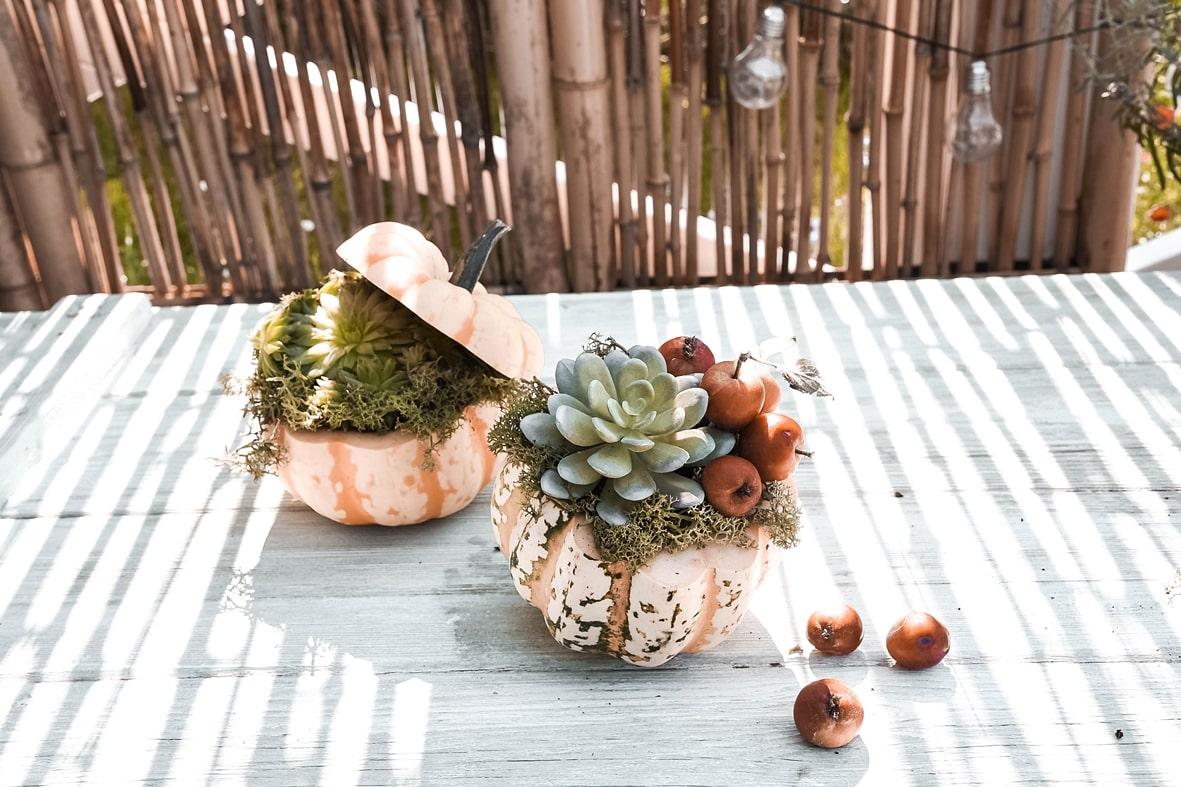 Kürbis mit Sukkulenten und Zieräpfel dekorieren.