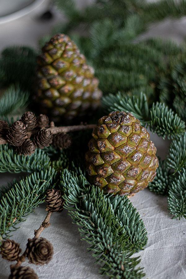 Tanne, Pinienzapfen und Lärchenzapfen für die Adventstischdeko