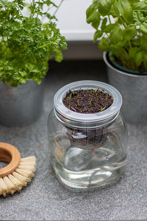 Kräuter selber ziehen für mehr Nachhaltigkeit in der Küche