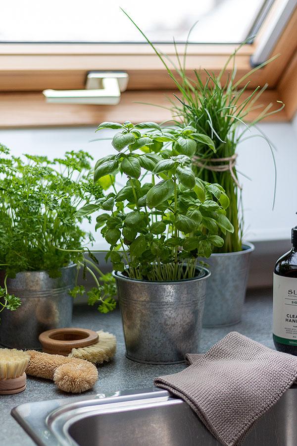 Kräuter vom Bauern um die Ecke für mehr Nachhaltigkeit in der Küche