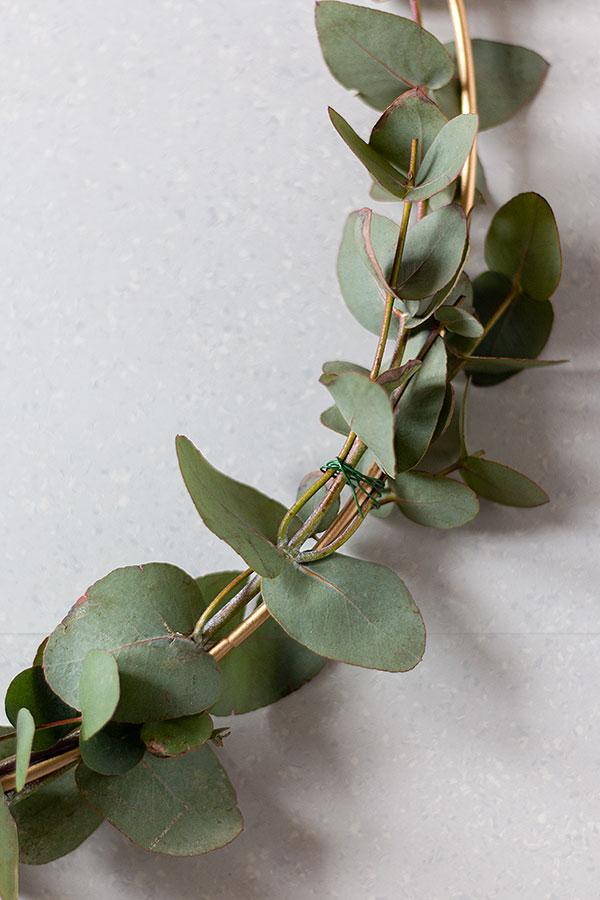 Eukalyptus mithilfe von Floristendraht im Halbkreis am Metallring befestigen
